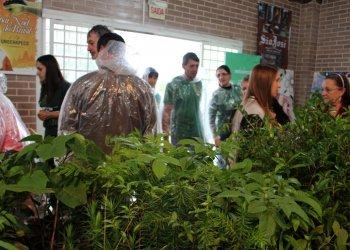 Mudas de plantas nativas estão sendo distribuídas entre os visitantes do Viveiro Florestal