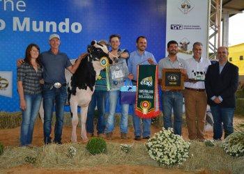 Família Girardi, de Pinhalzinho, comemora a premiação de grande Campeã Fêmea Jovem da raça Holandesa