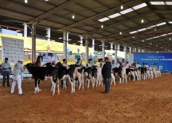 Renomado jurado oficial da raça Holandesa, Flávio Junqueira, avaliou as características dos bovinos