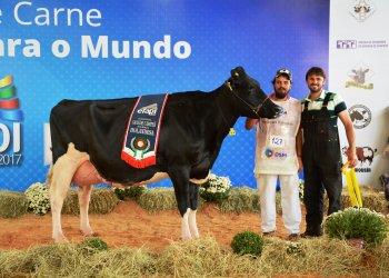 A Grande Campeã foi a vaca Sipal Elsa 926 Reginald 232556 do criador Clair Eloy Dariva