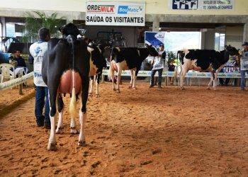 Vacas em lactação de várias regiões do Estado participaram do julgamento