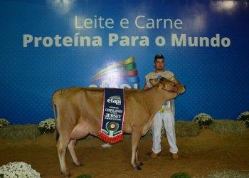 A Reservada Campeã Jovem da raça Jersey foi a campeã do torneio leiteiro