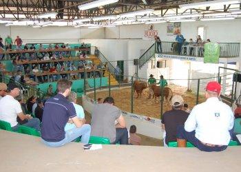 Foram vendidos 480 animais, divididos em 59 lotes